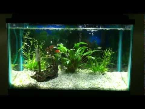 10 Gallon Fresh Water Aquarium - YouTube 10 Gallon Home Aquariums