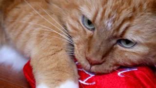 Happy Valentine's Day Kitty Cat