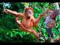 а мы отвисаем как обезьяны в джунглях слушать