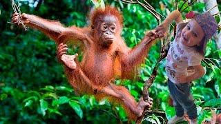 T Killah Дневник Хача Обезьяны Премьера Клипа 2016 Мы отвисаем как обезьяны в джунглях