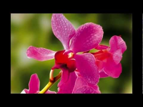 ดอกไม้ประจำชาติอาเซียน