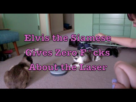 Elvis the Siamese Cat Gives Zero F*cks About the Laser