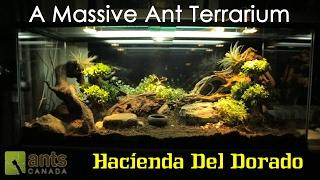 """A MASSIVE ANT TERRARIUM """"Hacienda Del Dorado"""""""