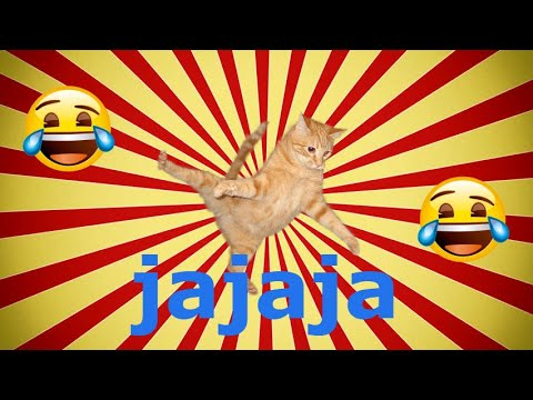 vídeo de gatos graciosos risas 2019 animales Morir de Risa