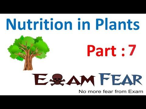 Biology Nutrition in Plants Part 7 (Parasitic , insectivorous Plants) Class 7 VII