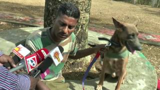 Dog Will Save Tigers From Now on in Mudumalai Forest - Must Watch