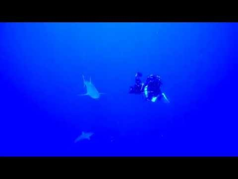 Filming Galapagos Sharks