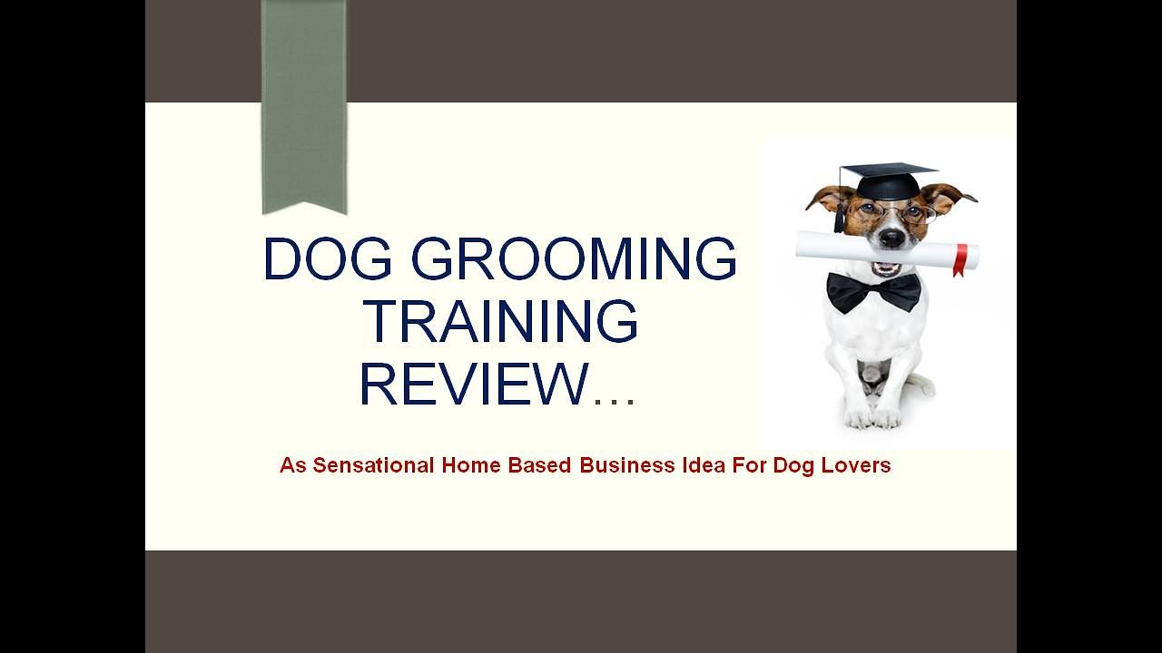 Online Dog Grooming Schools Review Youtube