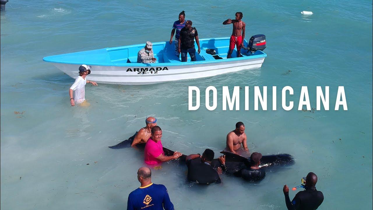 Спасение маленького кита на берегу атлантического океана. Туристы спасли кита! Мама ждала его в море