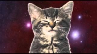 Прекрасный голос у котят