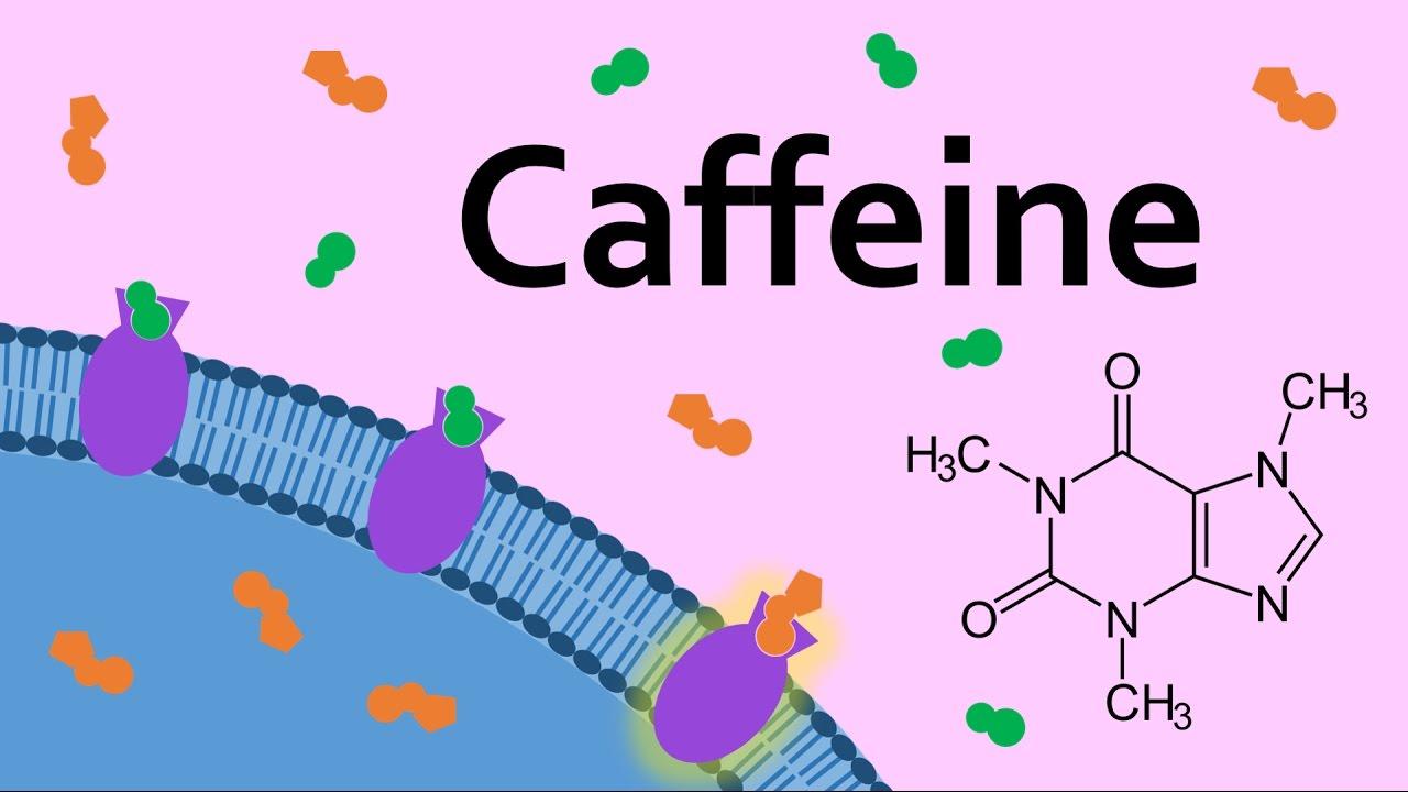 Caffeine and Adenosine Receptors - YouTube