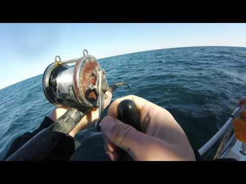 Deep Sea Fishing Orange Beach Alabama