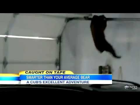 Bear Cub Stuck Hanging From Garage Door Caught On Tape