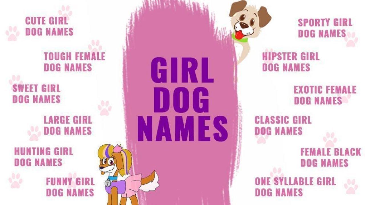 Dog Names Top Female
