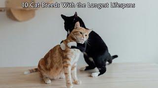 10 Cat Breeds With The Longest Lifespans | Longest Lifespans Cats