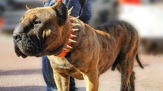 10 Best Hybrid Dog Breeds In The World