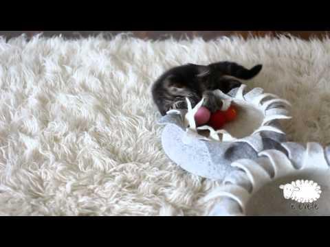 elevele cat toys