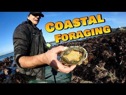 Coastal Foraging - Lobster , Ormer , Conger Eel , Scorpion Fish , Squat Lobster
