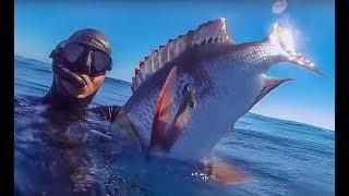 Подводная Охота на Нуси-Бе