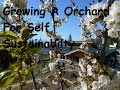 Modern Off Grid Living: Fruit Trees As Part Of Your Sustainabilty
