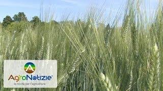 Assosementi: sezione Cereali
