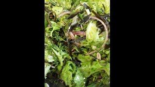 Салат из морской капусты. Йод. Щитовидка. Келп.