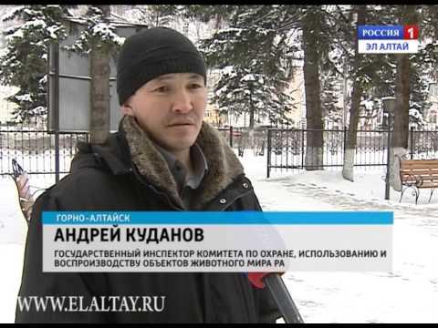 Размер штрафа за косулю достигает 100 тысяч рублей