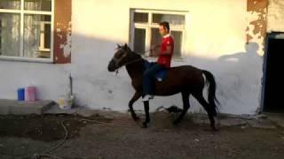 at eğitmeni yunus alıştırma binişler