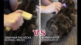 Обычная расчёска vs фурминатор; Normal brush vs furminator