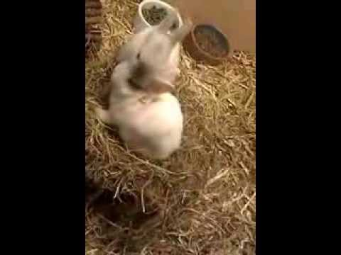 Konijn wast konijn