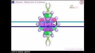 Non homologous end joining