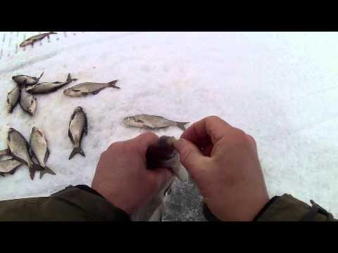 ловля синца на рыбинке