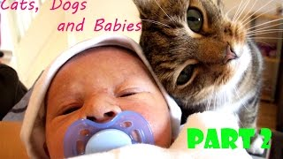 Cats, Dogs, and Babies - Who are the loveliest ones? Part 2
