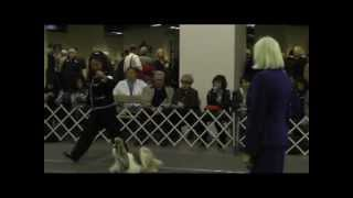 Shih-tzu Club Of Northern New Jersey