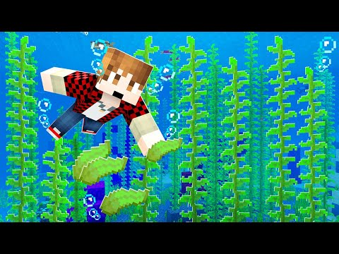 Building the PERFECT Kelp Farm in Minecraft (cheap build!)