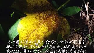 『三島由紀夫を洗脳した神島』右傾化の原点は神島にあった…[Ver.2 ~×2倍速版]八代神社と漁村 三重県神島