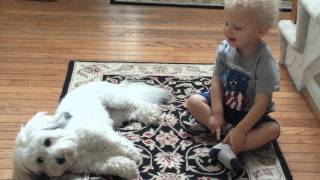 Glory (Coton De Tulear Dog) Makes Friends with Baby Boy