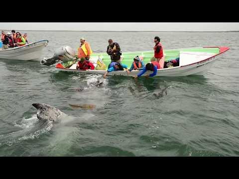 Baja Whale Camp in Magdelena Bay - Loreto