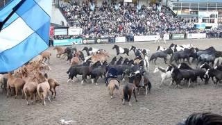 Troupeaux de chevaux et Gauchos argentins dans la pampa