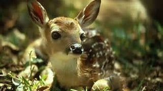 I Pet a BABY Deer!!  Ruby's Zoo