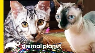 How Many Of These Incredible Cat Facts Did You Know? | Cats 101