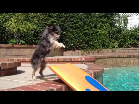 Swimming and Boogie Boarding Adventures of Pyro the Aussie Shepherd Toy
