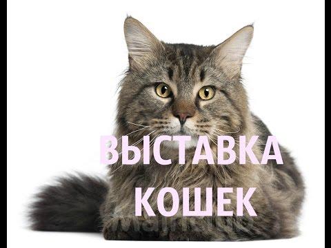 Выставка кошек  Екатеринбург 2016