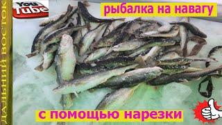 Рыбалка на навагу с помощью нарезки