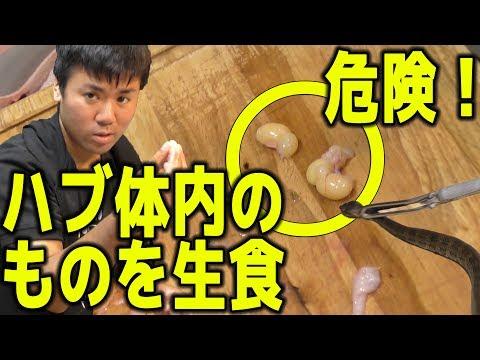 生きたハブの腹から見た事ない物体が出たので食べてみた。