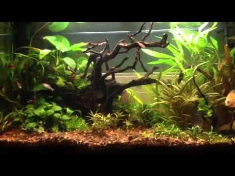 Small discus in 120l aquarium youtube for Aquarium 120l