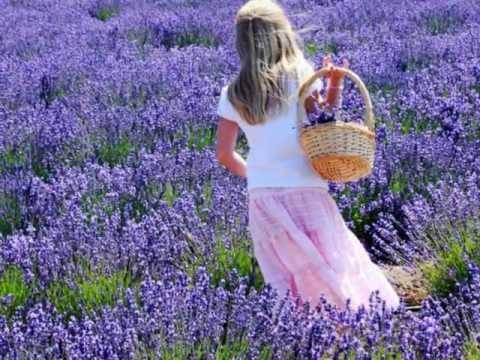 Lavender Hill - Brian Crain