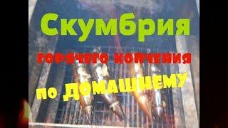 Скумбрия горячего копчения // Рецепт