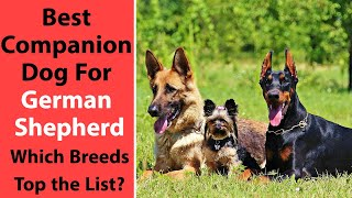 Best Companion Dog for German Shepherd: Which Breeds Top the List?