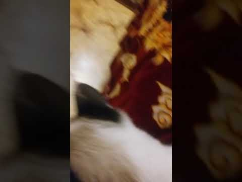 У кота глаз болит